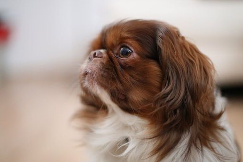dog sideview