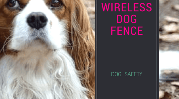 Best Wireless Dog Fences 2018 : The solution to your dog's happiness and safety.