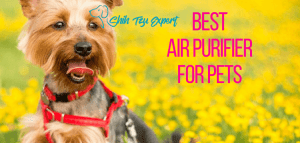 Best Air Purifier For Pets : Top 10 best air purifiers for pet owners