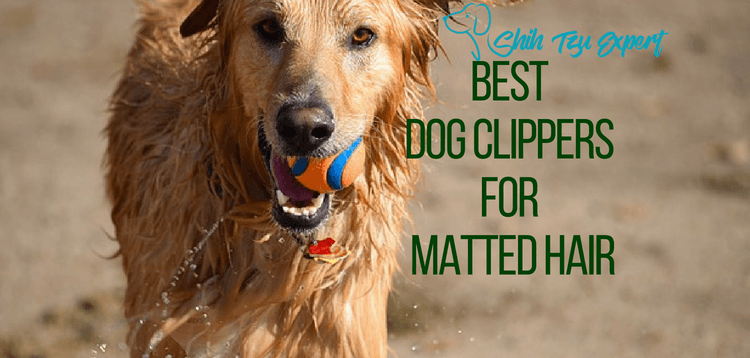 Best Dog Clippers for Matted Hair [Pet Safe]