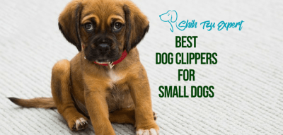 Best professional Dog Clippers for little Dogs