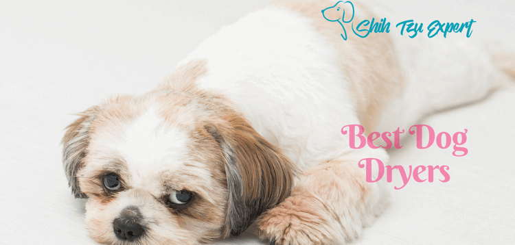 Best Dog Dryers