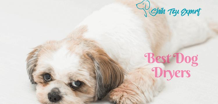 Best Dog Dryers