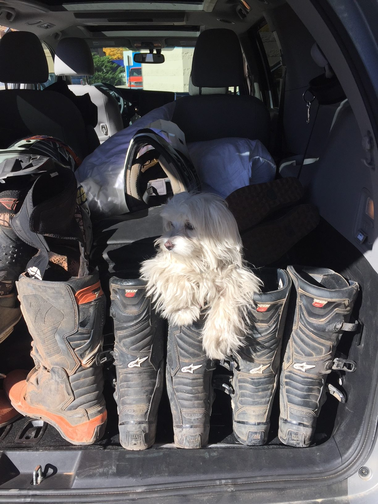 DIY Grooming Tips for the Vandwelling Dog