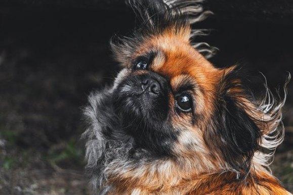 Grooming Yorkies vs grooming other breeds?