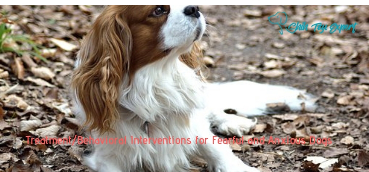Treatment_Behavioral Interventions for Fearful and Anxious Dogs