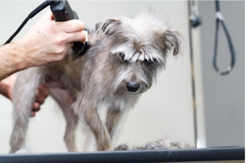 Electric dog hair clippers VS manual dog hair clippers