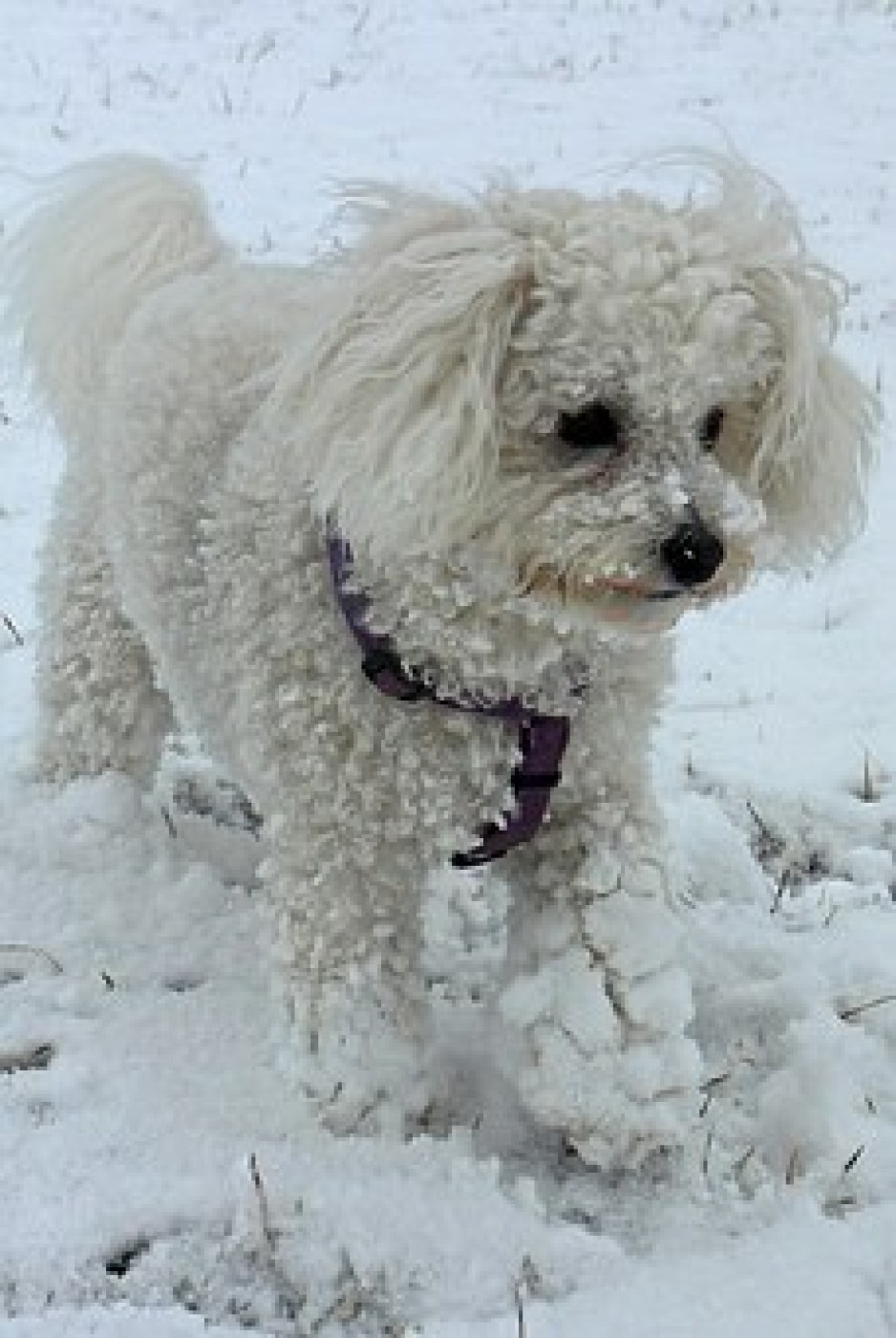 Frostbite in Dogs