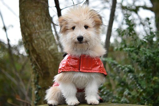 Top 5 Best Fleece Dog Coats
