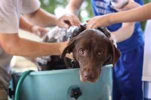 Top 11 Best dog grooming tubs for Home & Groomers in 2019