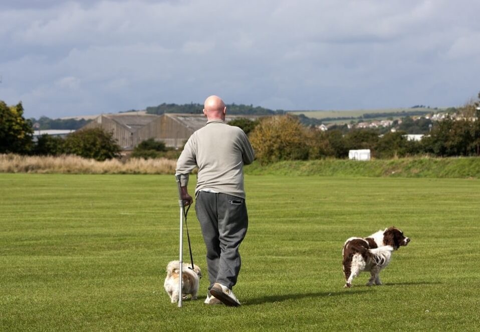 Wait, why is so important that my dog get exercise?