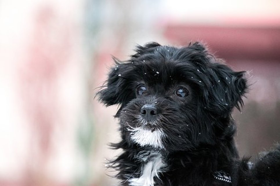 Are Some Breeds More Susceptible?