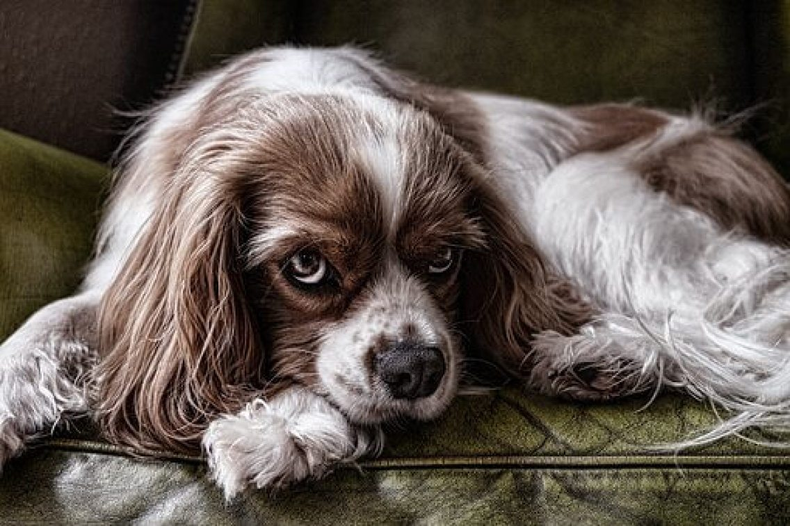 Creating a crate training schedule
