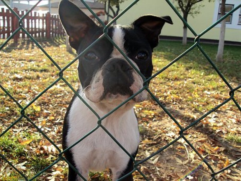 Con: PetSafe's In-Ground Fences don't block nosy neighbors