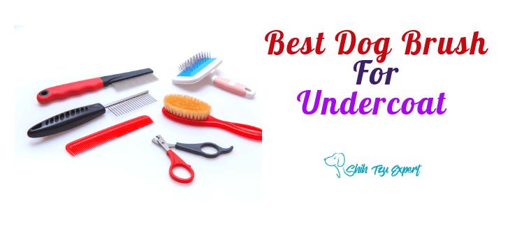 Best Dog Brush For Undercoat