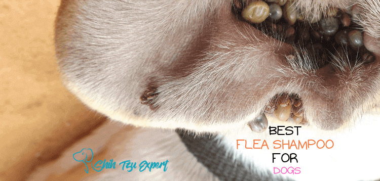 Best Flea Shampoos For Dogs