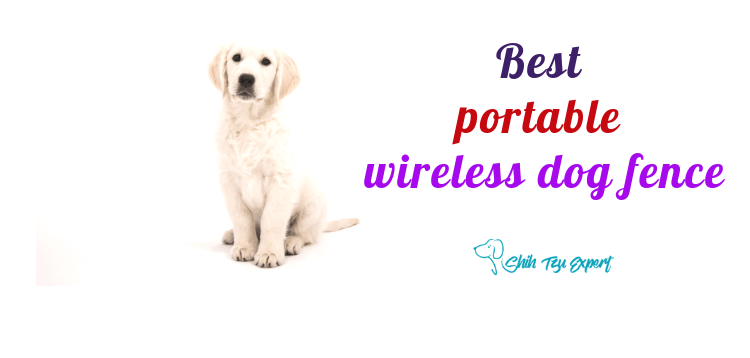 Best Portable Wireless Dog Fence