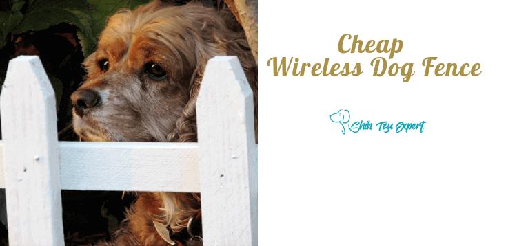 Cheap Wireless Dog Fence