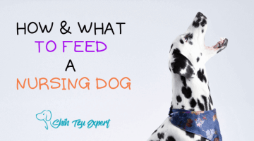 HOW & WHAT TO FEED A NURSING DOG