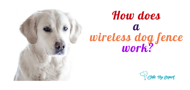 How does a wireless dog fence work?