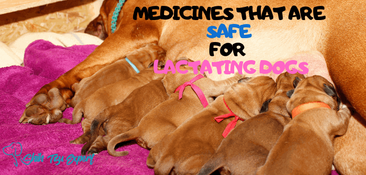 Medicines that are Safe [And Unsafe] for Your Lactating/Nursing Dog