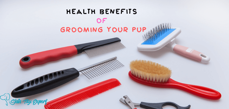The Important Health Benefits of Grooming Your Pup