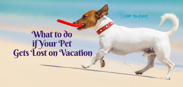 What to do if Your Pet Gets Lost on Vacation