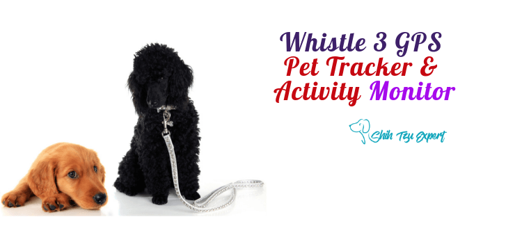 Whistle 3: GPS Pet Tracker & Activity Monitor