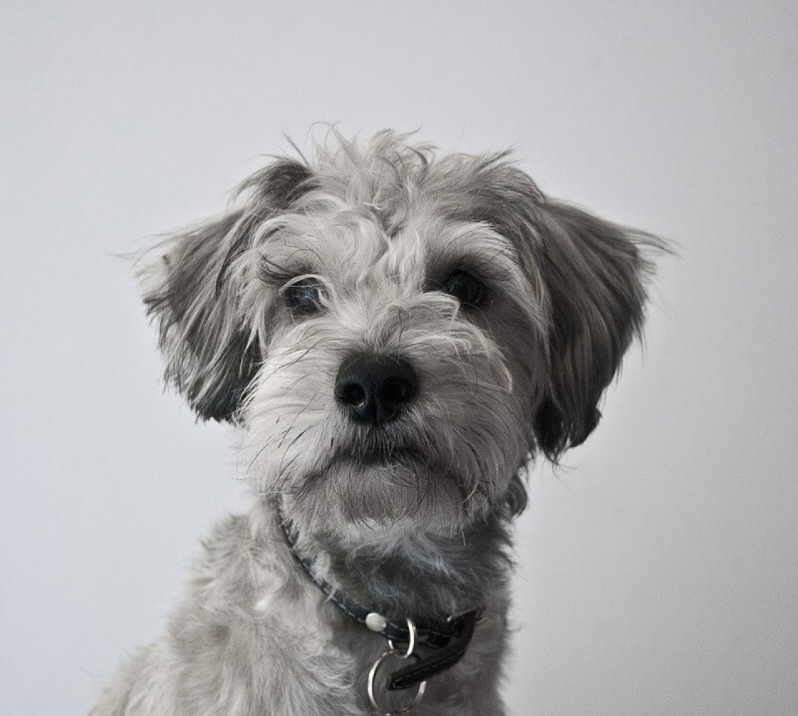 What is a good brush for short haired dogs?