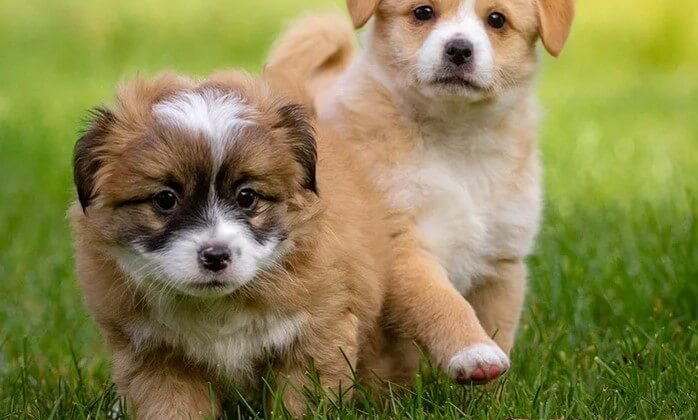 The Best Dog Collar Cameras