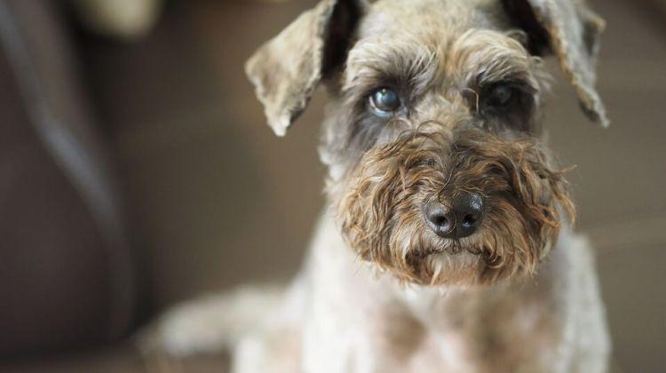 Smithbuilt Dog Kennel