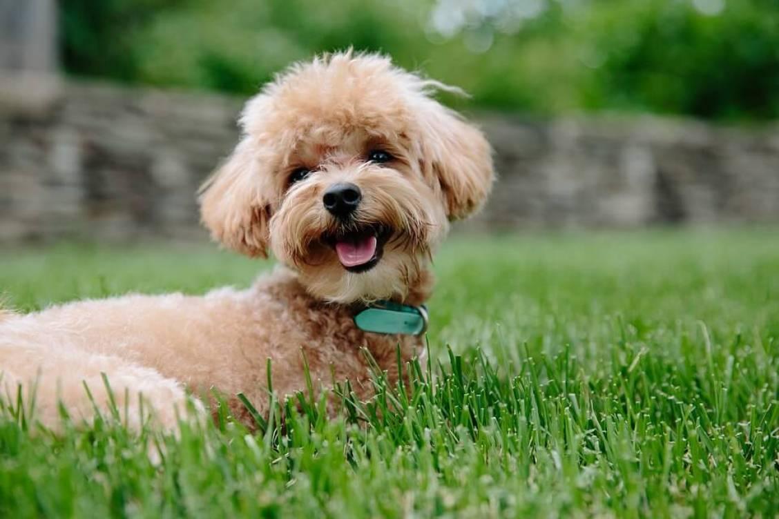 Fairwin -- Braided Leather Dog Leash