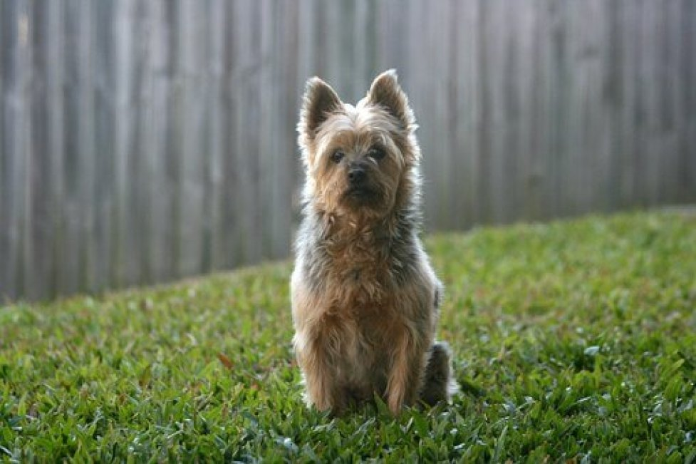 Best 2 Acre Wireless Dog Fence