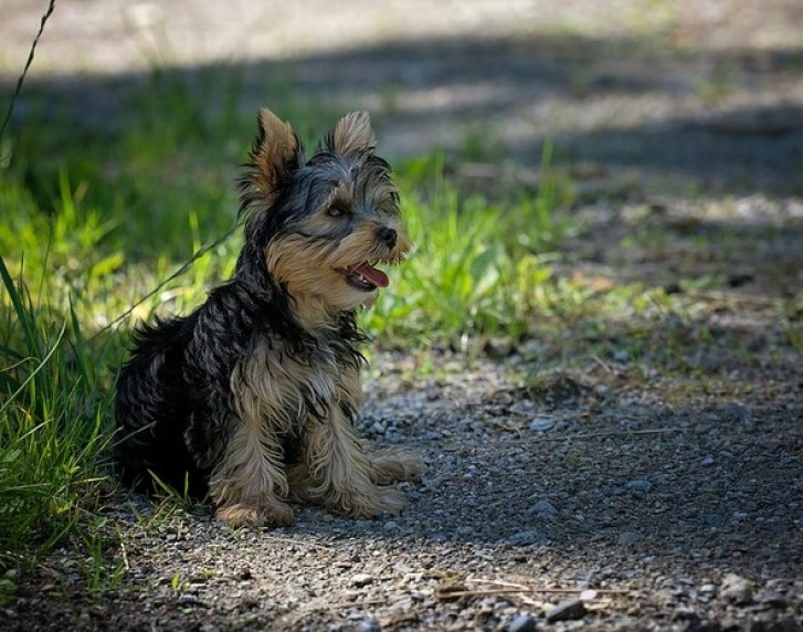 Honest Truth about In-Ground Wireless Dog Fences