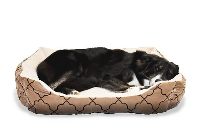 How Dirty Are Dog Beds?