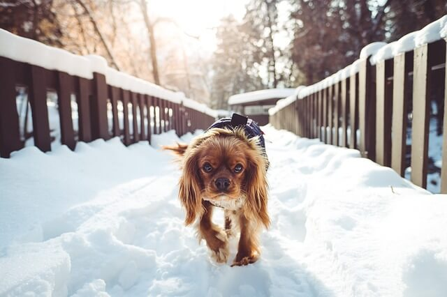 Pros and Cons of wireless pet containment systems