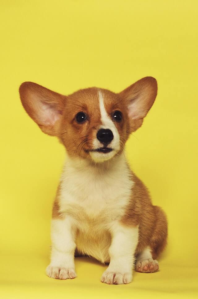 Types of Doggos