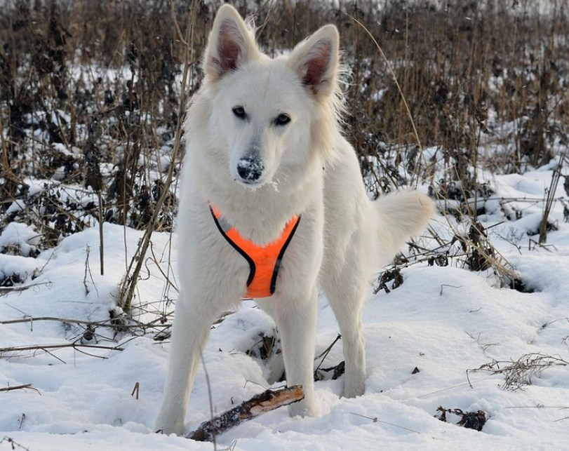 What type of winter dog door is best?