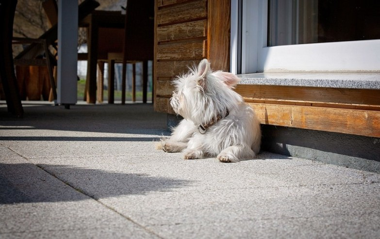 How to Cool a Dog House in the Summer