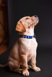 E-collar vs Shock collar [Which is best for your Pup?]