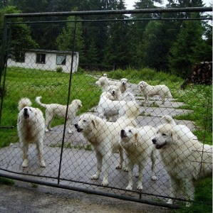 Best Electric Fence Chargers for Dog Fences