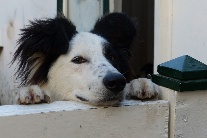 eXtreme Dog Fence