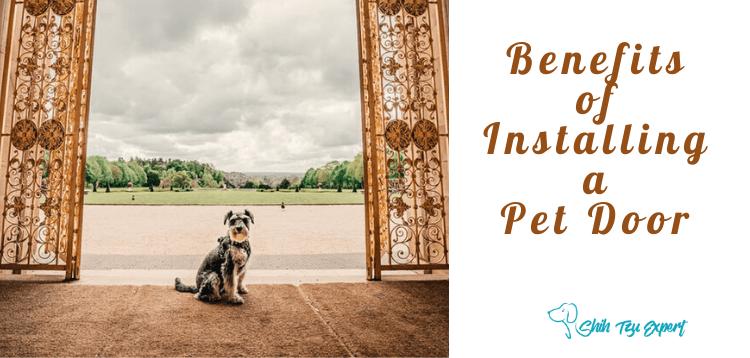 Benefits of Installing a Pet Door (1)