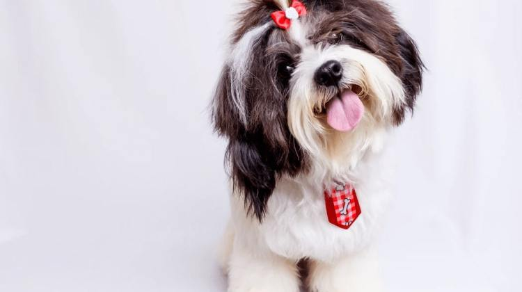When Does My Dog Need TPLO Surgery?