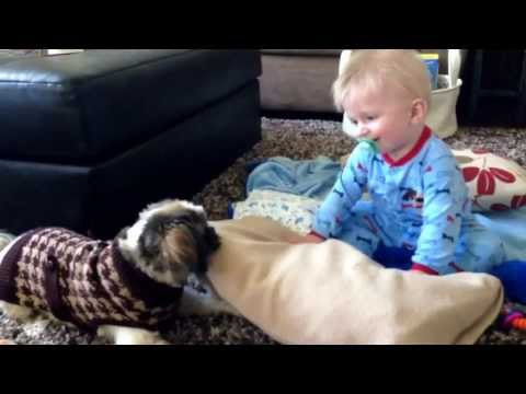 YOU MUST WATCH THIS! LAUGHING BABY AND SHIH-TZU!