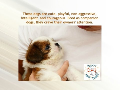 Shih Tzu Stop Barking – In This Free Mini Course Learn How to Train Your Shih Tzu to Stop Barking