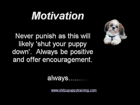 Shih Tzu Puppy Training – 7 things you should know.wmv