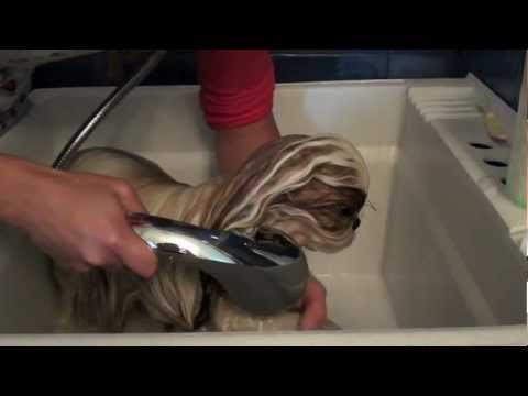 How To Give Your Shih Tzu A Bath