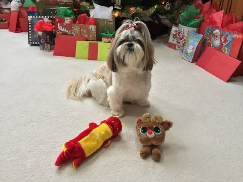 Cute Shih Tzu dog Lacey | Opening Christmas presents | New toys