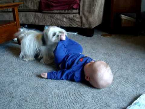 Baby Carey Laughing Loves Puppy